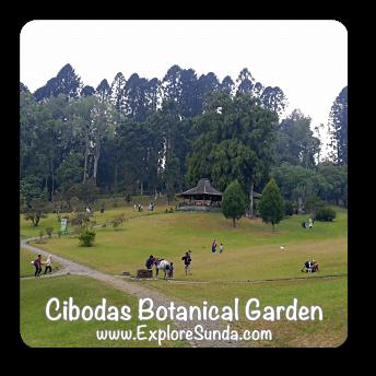 Cibodas Botanical Garden near Puncak Pass.