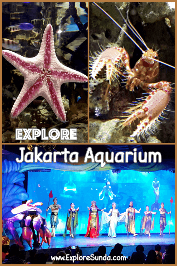 Explore Jakarta Aquarium at Neo Soho Mall Jakarta, see and touch the exotic sea creatures, watch The Pearl of South Sea performance, enjoy the 5D theater, and dive with sharks! | #ExploreSunda