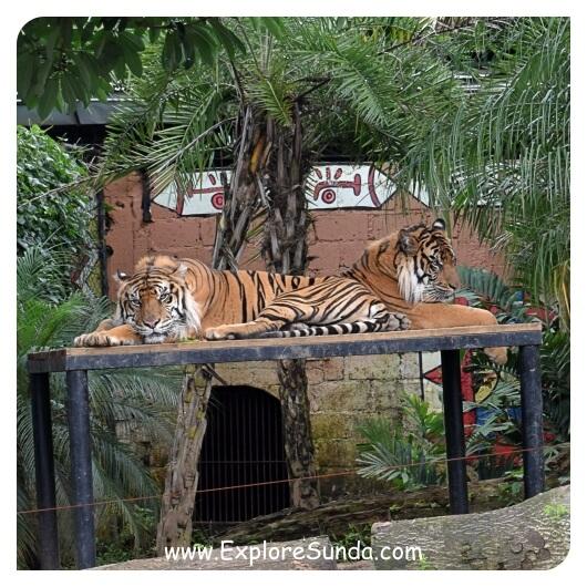 Jawa Timur Park 2 Batu Secret Zoo Museum Satwa