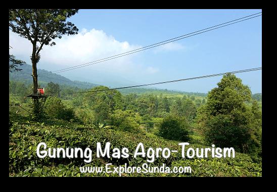 Flying Becak at Gunung Mas Tea Agro-Tourism, Puncak