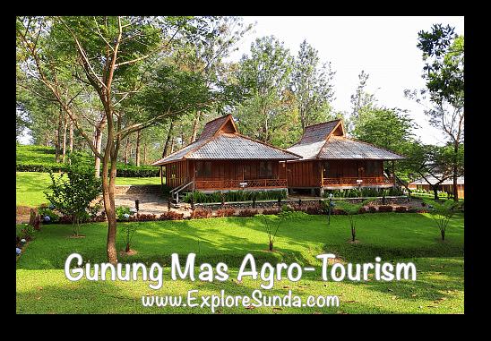 Gunung Mas Bungalows for rent, Puncak