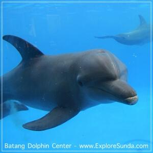Batang Dolphin Centre