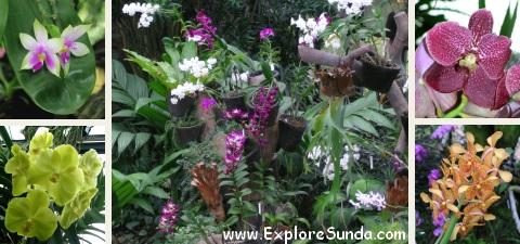 Orchid House at Bogor Botanical Garden
