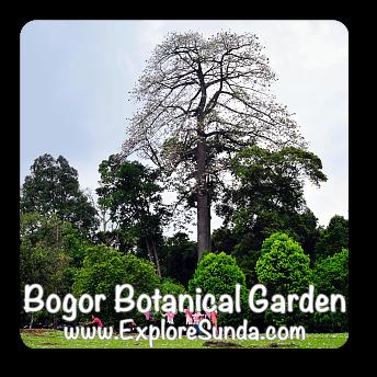 Bogor Botanical Garden, West Java