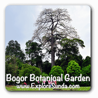 Bogor Botanical Garden.