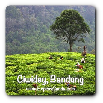 Places to explore in Ciwidey, Bandung