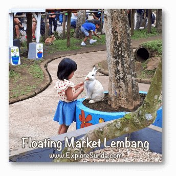 Parks and Gardens: Feeding a bunny at Floating Market Lembang, Bandung.