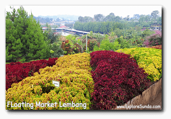 The colorful bushes at Rainbow Garden with the foodcourt of Floating Market Lembang at the far end.