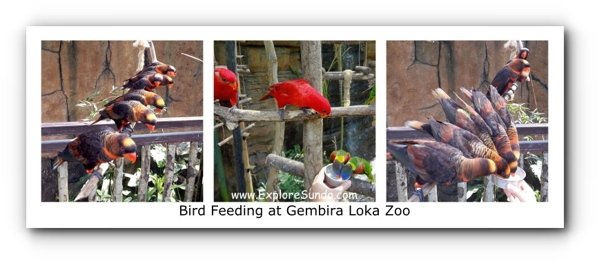 Feeding Lory Birds at Gembira Loka Zoo