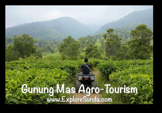 ATV ride at Gunung Mas Tea Agro-Tourism, Puncak