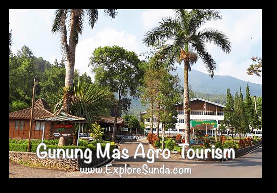 Gunung Mas Tea Factory, Puncak