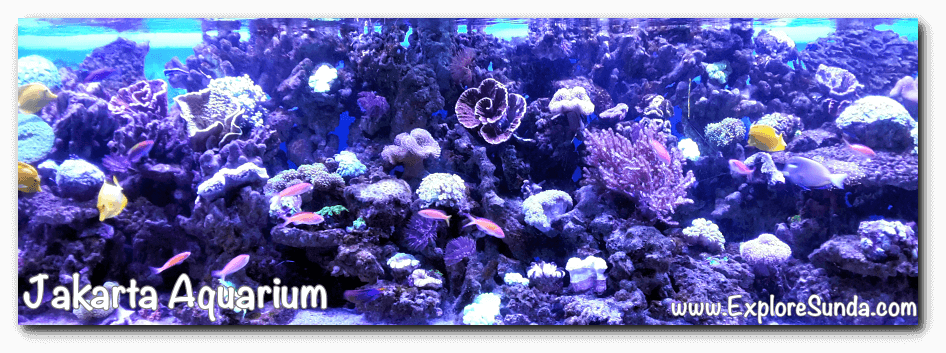 One of the coral reefs in Jakarta Aquarium.