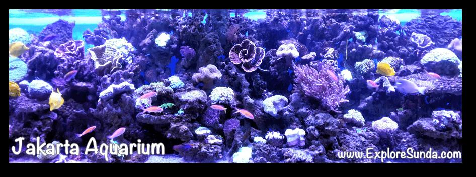 Jakarta Aquarium - Coral Reef