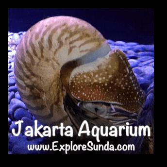 Jakarta Aquarium - Nautilus