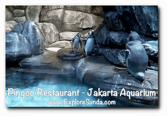 Pingoo Restaurant, dine with Humboldt penguins