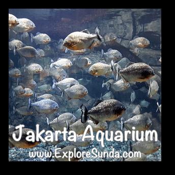 Jakarta Aquarium - Piranha