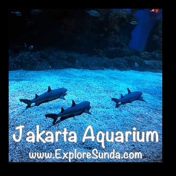 Sharks at Jakarta Aquarium.