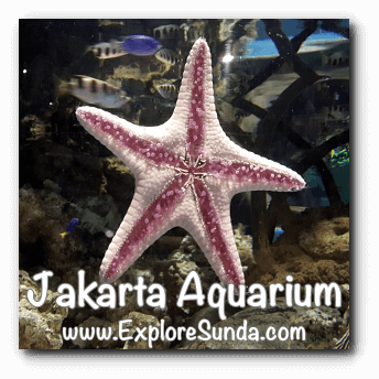 Jakarta Aquarium - Starfish