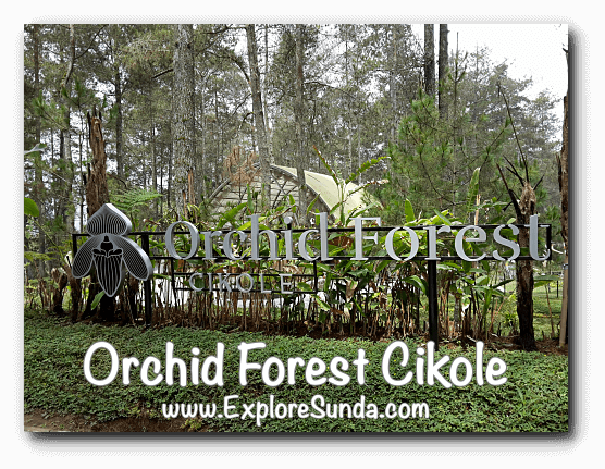 Orchid Forest Cikole