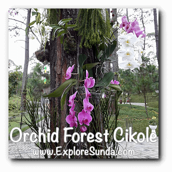 Orchids at Orchid Forest Cikole