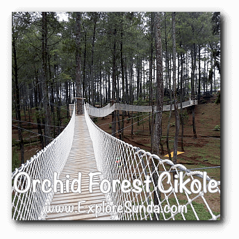 Sky Bridge at Orchid Forest Cikole