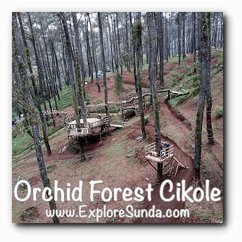 Wooden Stairs Obstacle at Orchid Forest Cikole