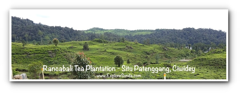 Rancabali Tea Plantation - Situ Patengan a.k.a. Situ Patenggang Bandung.