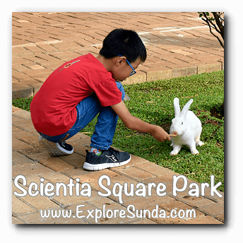 Feeding a rabbit at Scientia Square Park, Summarecon Serpong