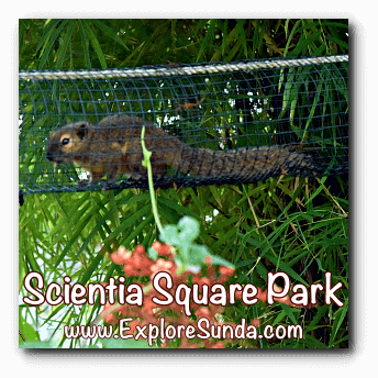 One of the three squirrels in the Butterfly Garden of Scientia Square Park, Summarecon Serpong