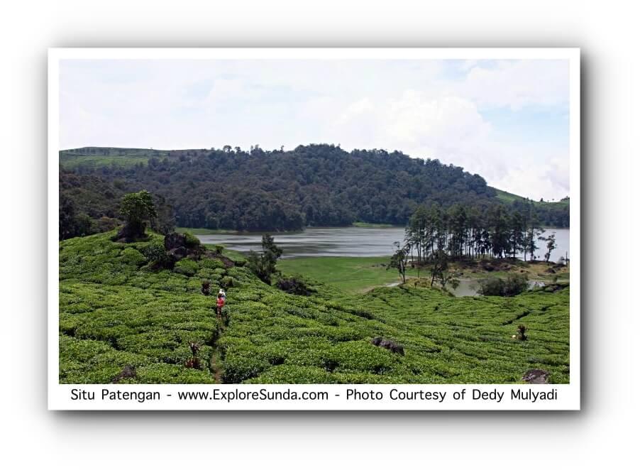 Tea Plantation at Situ Patengan, Ciwidey, Bandung.