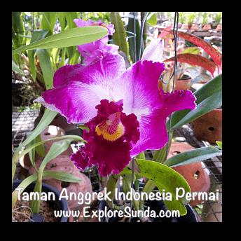 Taman Anggrek Indonesia Permai (TAIP), Jakarta