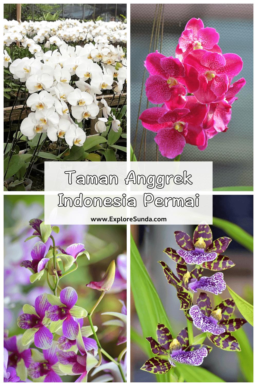 Taman Anggrek Indonesia Permai [TAIP] is the best place to buy varieties of orchids in Jakarta | #ExploreSunda
