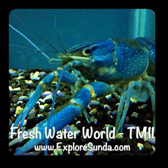 Fresh Water World in TMII, Jakarta