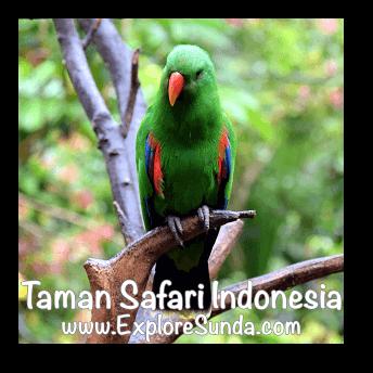 Bird Aviary in Taman Safari Indonesia Cisarua, Puncak