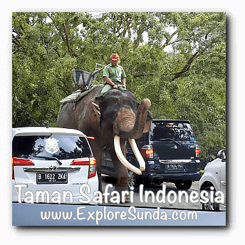 An elephant patrol inside Safari Journey in Taman Safari Indonesia Cisarua, Puncak
