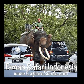 An elephant patrol inside Safari Journey in Taman Safari Indonesia Cisarua, Puncak