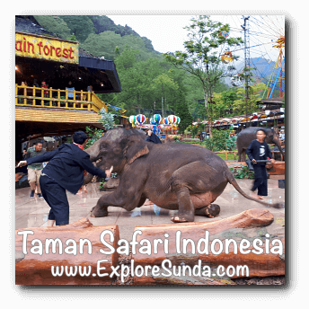 Elephant Show in Plaza Gajah at Taman Safari Indonesia Cisarua, Puncak