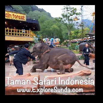 Elephant Show in Plaza Gajah at Taman Safari Indonesia Cisarua, Puncak
