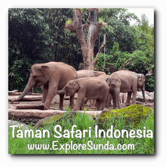 A herd of elephants at Taman Safari Indonesia Cisarua, Puncak