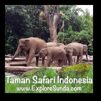 A herd of elephants at Taman Safari Indonesia Cisarua, Puncak