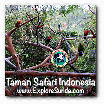 Photo booth with colorful birds in Taman Safari Indonesia Cisarua, Puncak