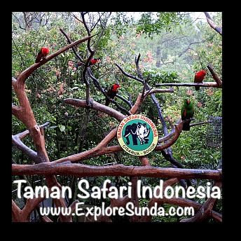 Photo booth with colorful birds in Taman Safari Indonesia Cisarua, Puncak