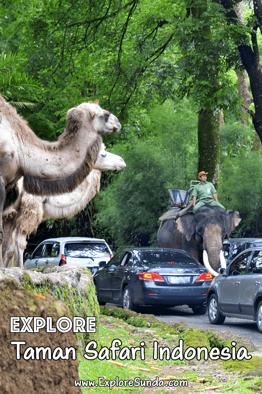Explore Taman Safari Indonesia Cisarua Bogor / Puncak | #ExploreSunda #TamanSafariIndonesia