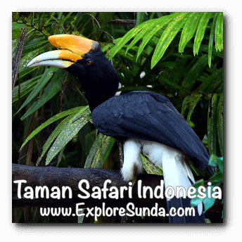 Toucan at Taman Safari Indonesia Cisarua, Puncak