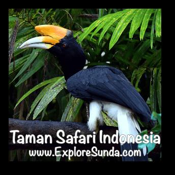 Toucan at Taman Safari Indonesia Cisarua, Puncak