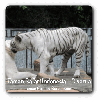 Taman Safari Indonesia - Cisarua, Puncak