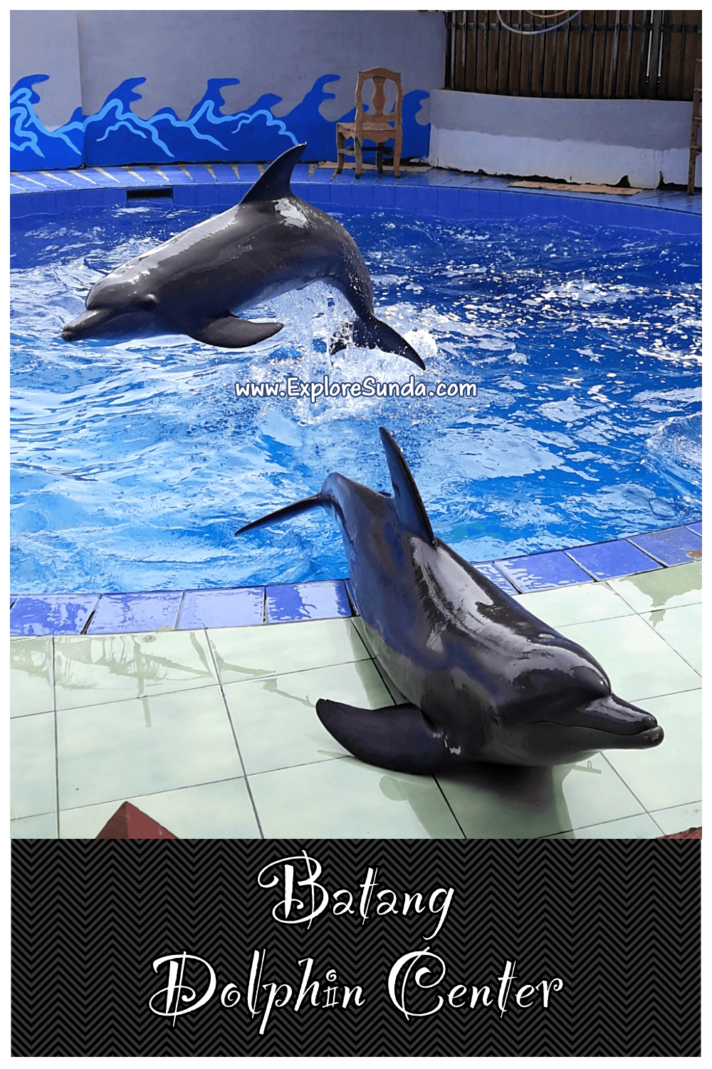 Explore Batang Dolphin Centre | A dolphin conservatory, a branch of Taman Safari Indonesia | Watch the cute dolphins play and perform :) | #ExploreSunda