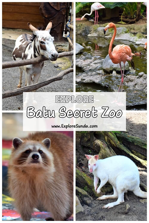 Explore Batu Secret Zoo | One of the best zoos in Indonesia | #ExploreSunda