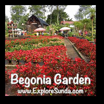 Begonia Garden in Maribaya, Lembang