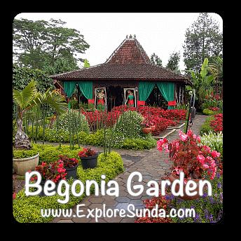 Begonia Garden, Maribaya - Lembang